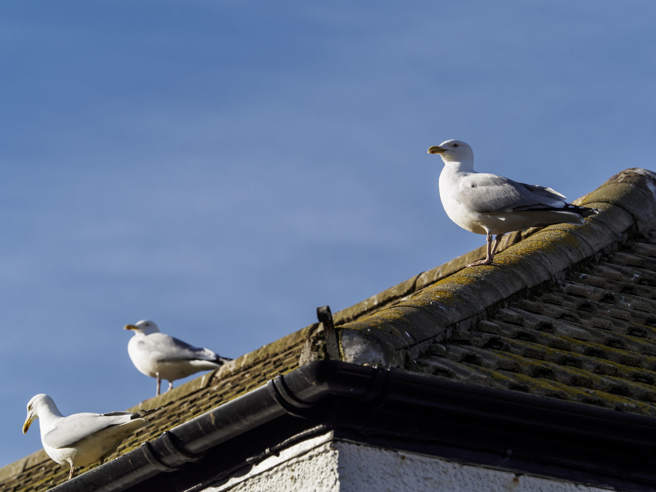 Seagulls wait on a roof in Mevagissey harbour Cornwall Animal Themes Animal Wildlife Animals In The Wild Bird Nature Perching Roof Seagull
