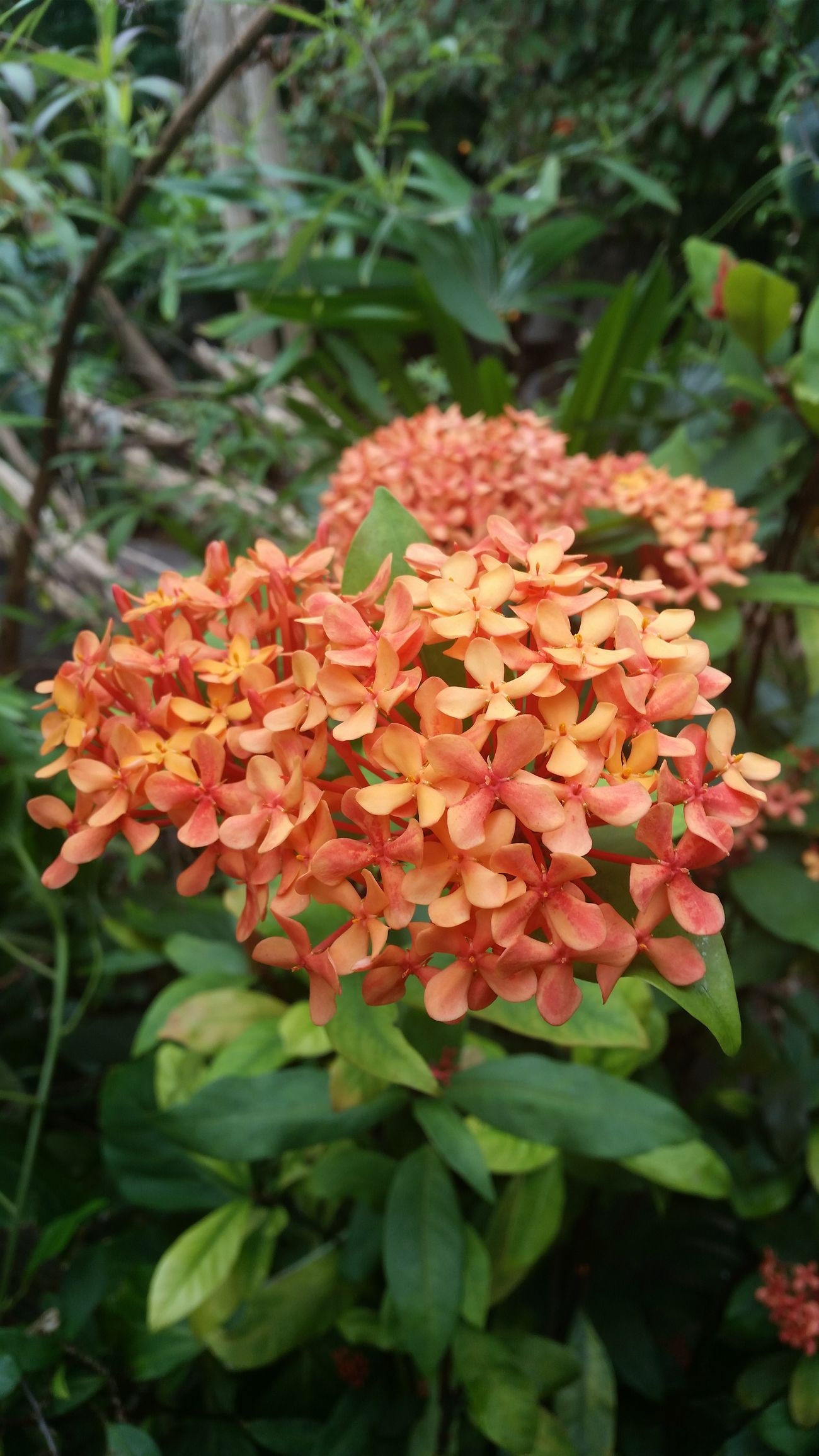 Outdoors Having Fun Makesmesmile Enjoying Life Good Life Happy Nature Perspective Close Up Nature Beauty In Nature Butterfly Garden Orange Orange Flower