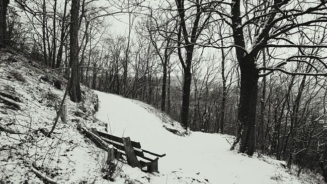 It's Cold Outside Snow Thuringen Blackandwhite Black And White Jena