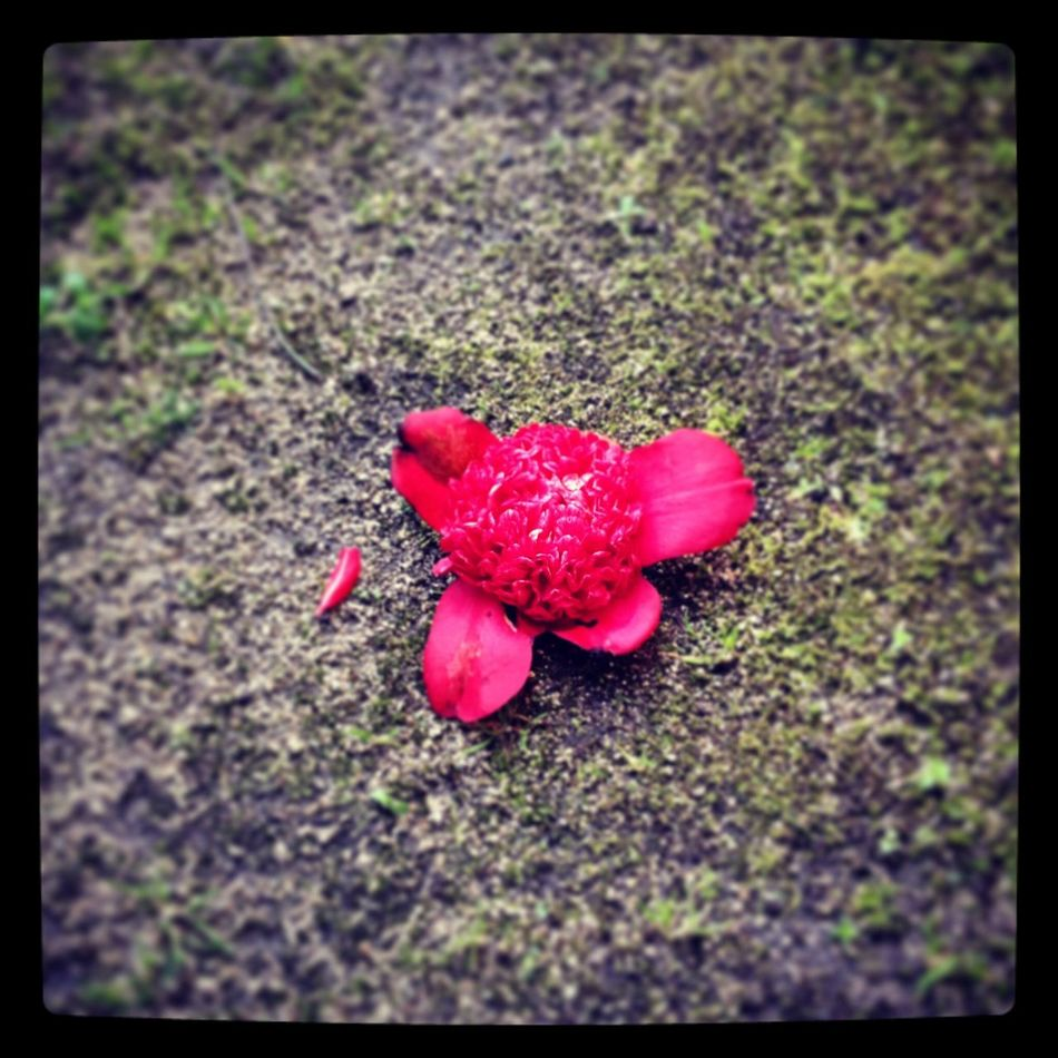Garden Flower Botan