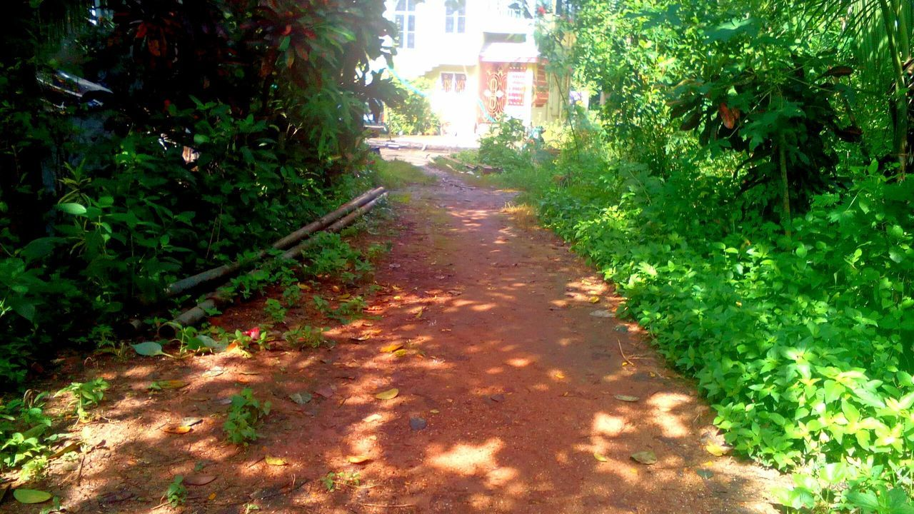 the way forward, growth, plant, tree, nature, day, outdoors, leaf, no people, foliage