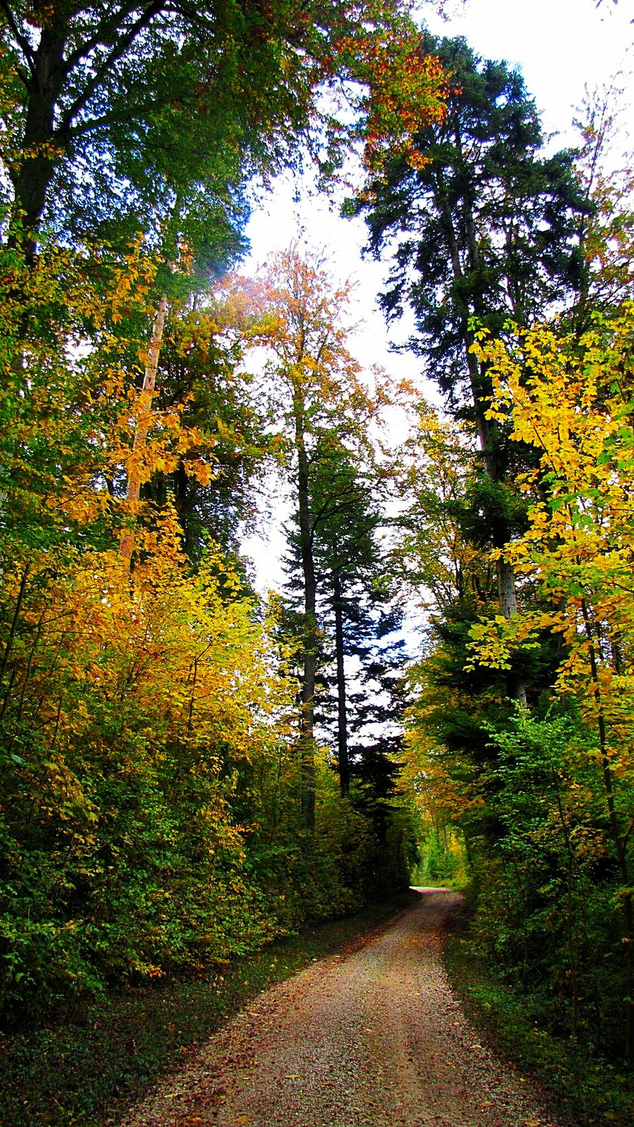 Go for a walk, side by side with my faithful dog. Enjoy the spirits of nature and strenghten myself again Tree Nature Outdoors Beauty In Nature Goodforthesoul Thinkpositive Lovethenature Autmn☺ Adventure The Way Forward Power In Nature Forestwalk Dreambig Autmn Trees WoodLand Autmncolors Thinking About Life Thinkpositve Lifetree