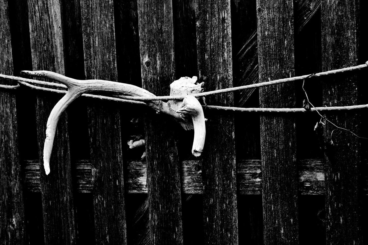 Antler Art Backgrounds Black And White Creepy No People Obscure Outdoors Rope Star Strength Weird Yard Antler Antlers Skull Animal Skull Wood - Material Wooden Yard Art Eyeemphoto Blackandwhite High Contrast High Contrast Bnw Check This Out Intriguing