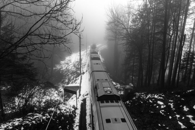 ghosttrain Train - Vehicle Travel Fast Train Austria Innsbruck Cold Blackandwhite Black And White Black & White EyeEm Best Shots - Black + White Tree Nature No People Outdoors Forest