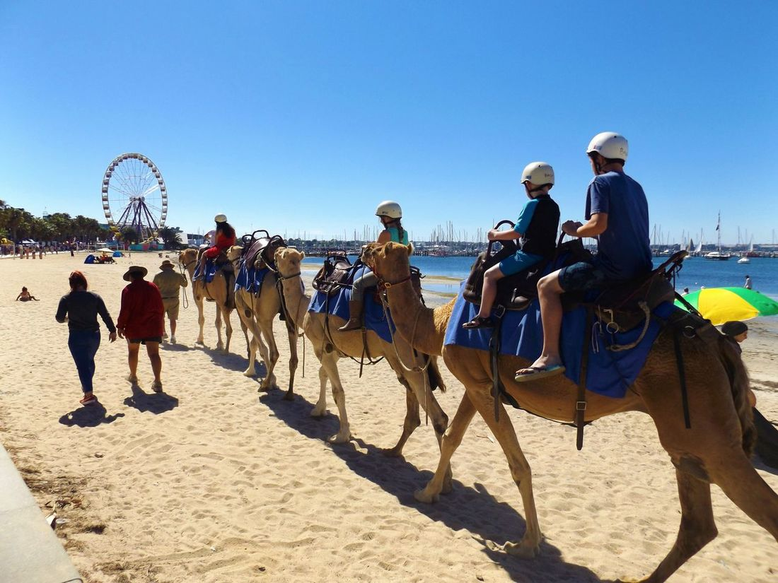 #adaptedtothecity #animal #beach #Boats #ferriswheel #sand #summer Camel Camelride Clear Sky Day Large Group Of People Outdoors People Real People Sky