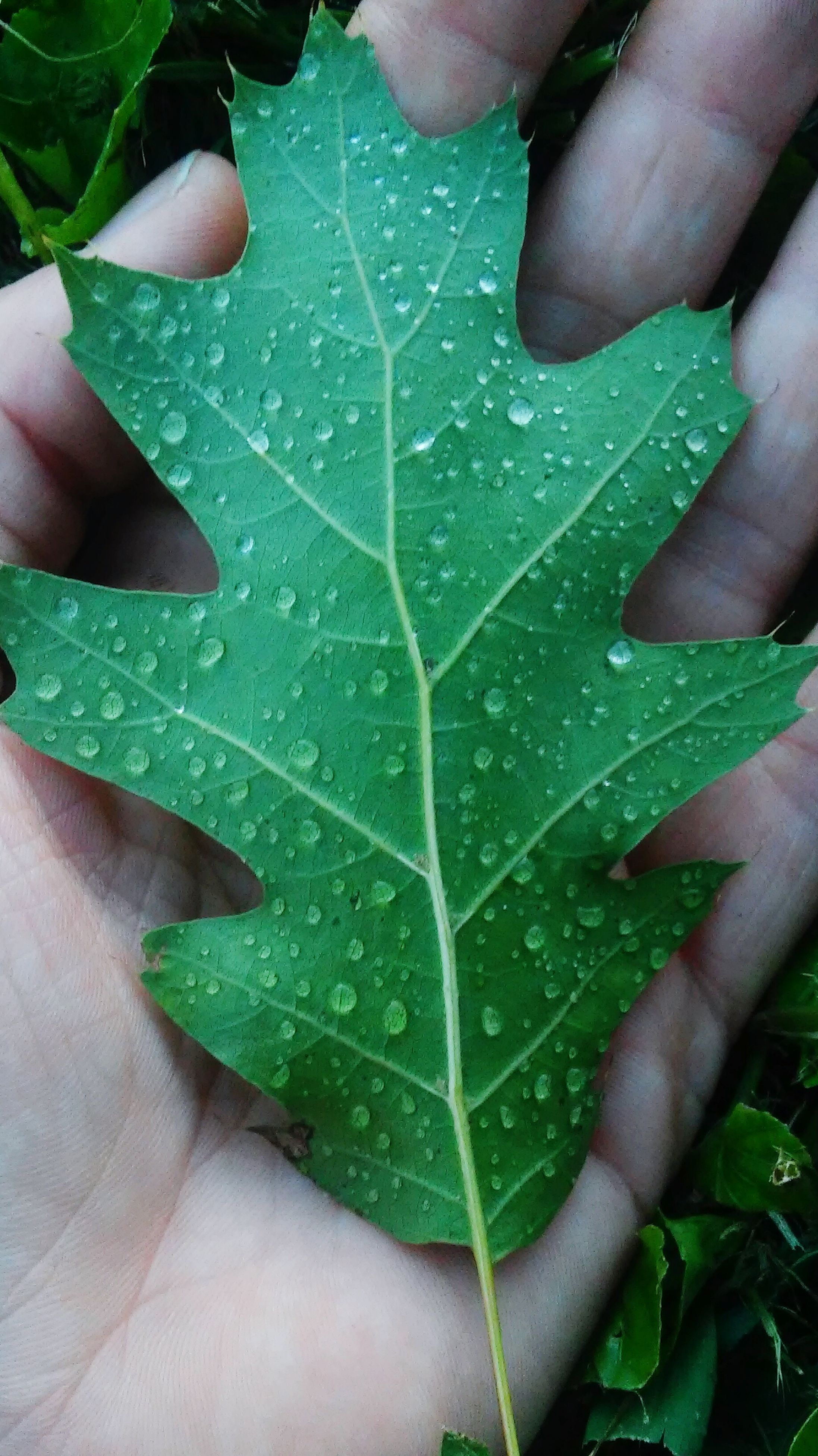 person, part of, leaf, cropped, holding, human finger, unrecognizable person, personal perspective, green color, close-up, leisure activity, lifestyles, leaf vein, high angle view, men, wet