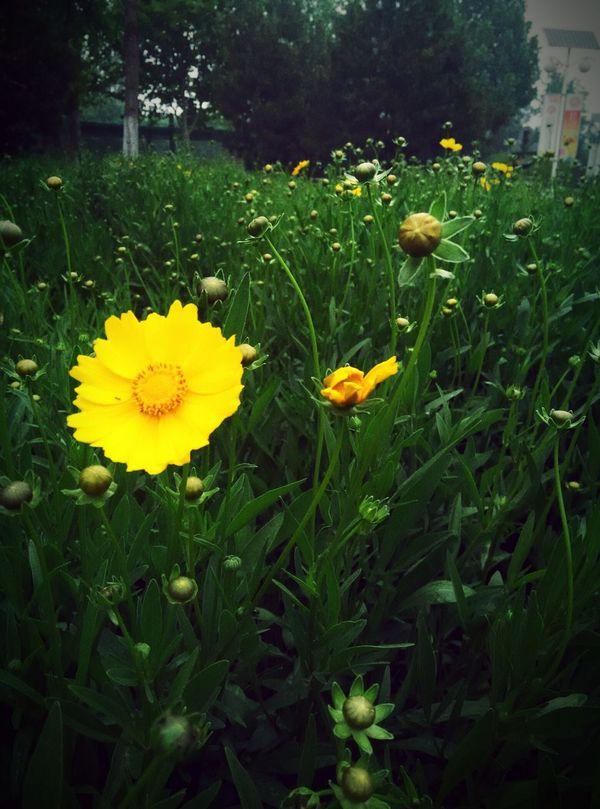 flowers Flowers Summer