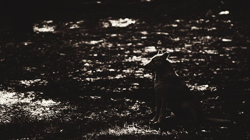 And they call me a dog... Shadows And Silhouettes Garden Nature Dog Canine Contemplate First Eyeem Photo