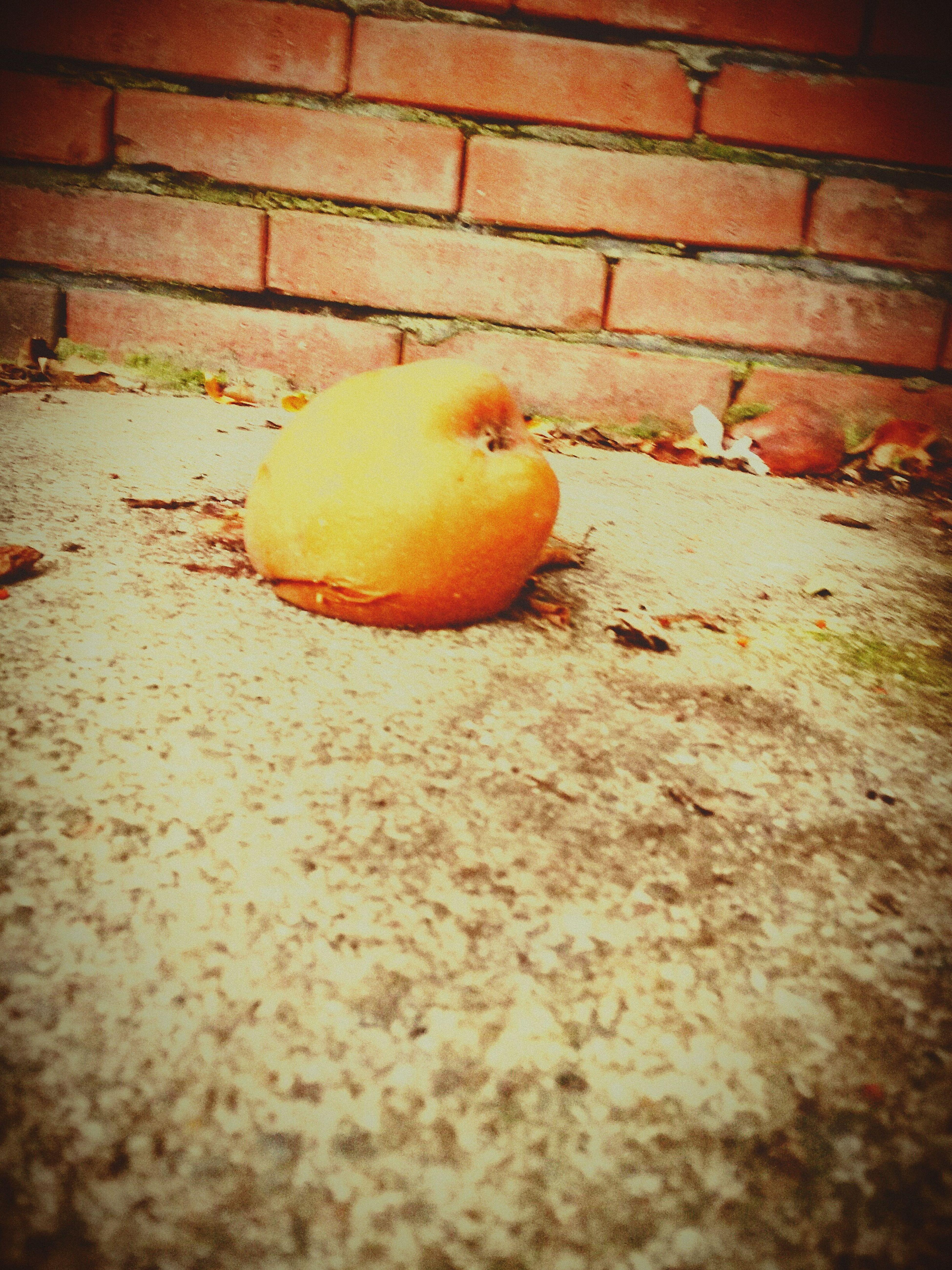 Fallacious Apple Tree Apple