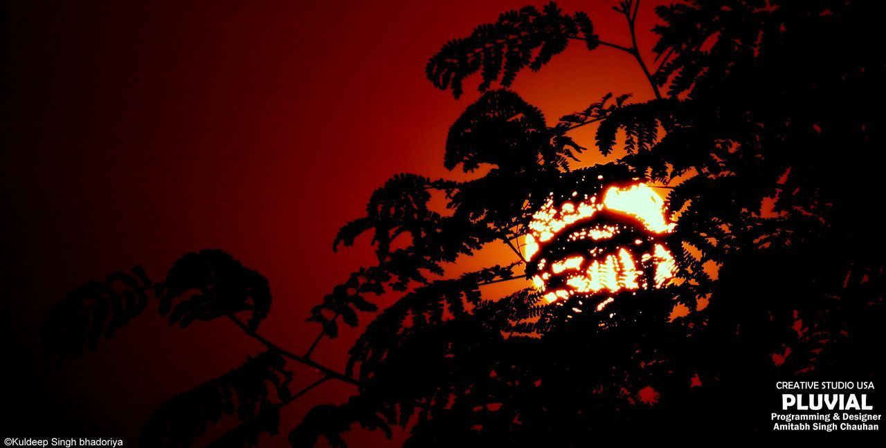 silhouette, low angle view, tree, no people, night, illuminated, outdoors, sky, sunset, growth, nature, beauty in nature, close-up
