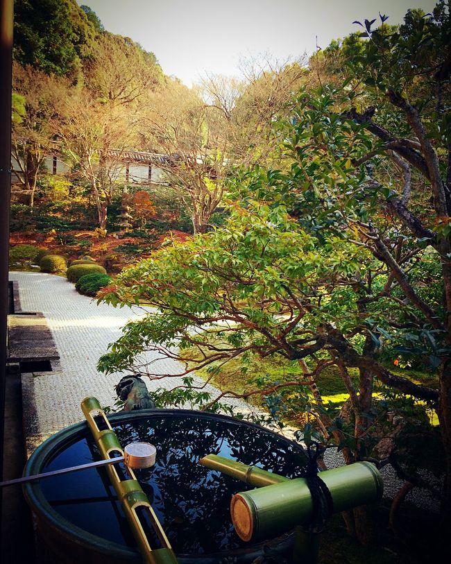 泉涌寺 京都 Relaxing 寺社仏閣 泉涌寺本坊庭園 Kyoto