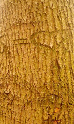 Baumstamm Baum 🌳🌲 Baumrinde Tree Trunk In Deutschland Im Wald Full Frame Textured  Close-up Yellow Textile