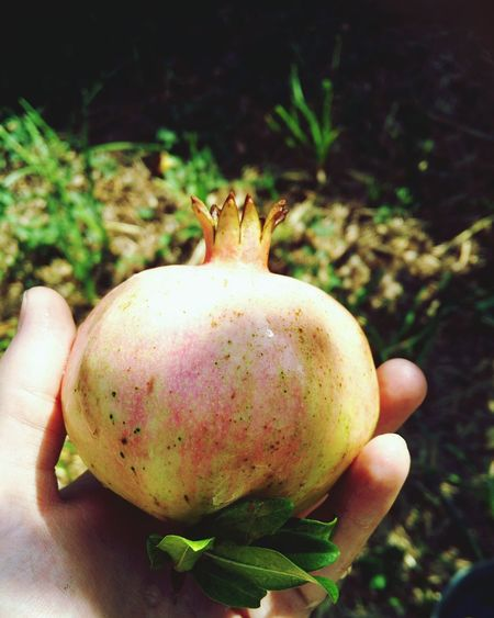 Healthy Eating Pomegranate гранат символ азербайджана азербайджан Азербайджанские вкусности😋 фрукты фрукт сад Плоды работа в саду деревня Fruits Freshness Nature