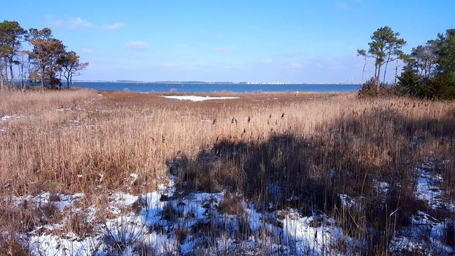 Lunchtime walk James Farm Ecological Preserve 2016 first snow