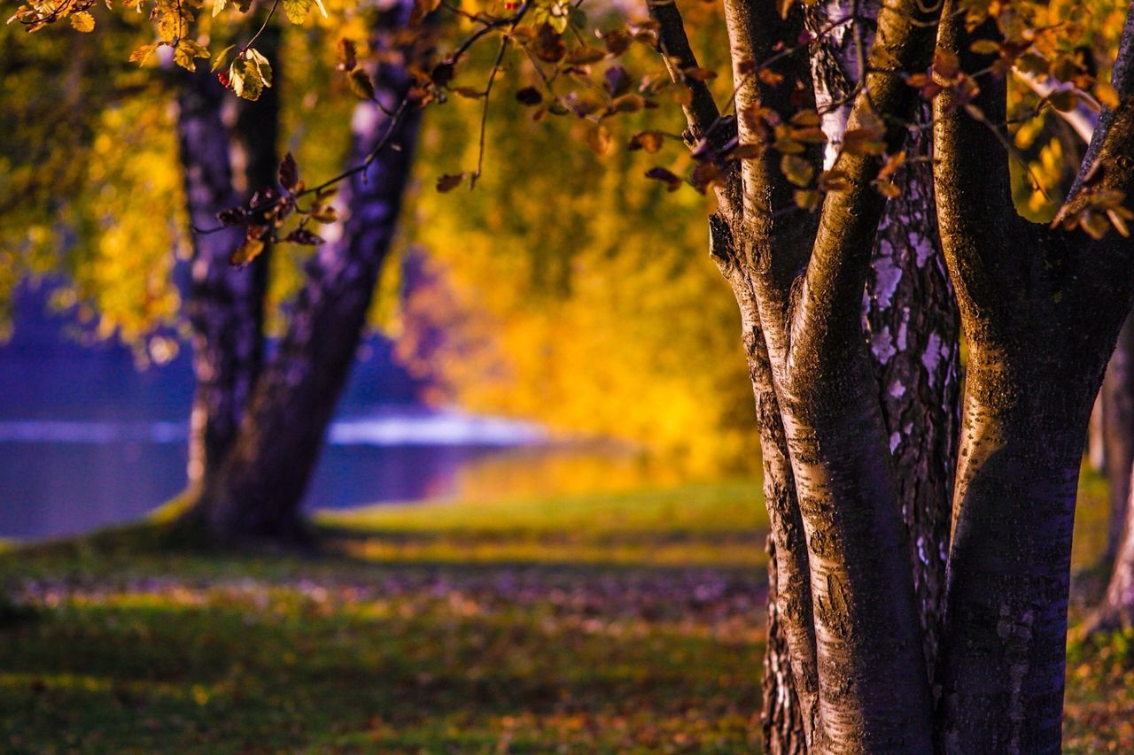 tree, tree trunk, beauty in nature, nature, growth, no people, outdoors, purple, focus on foreground, tranquility, branch, scenics, day, close-up