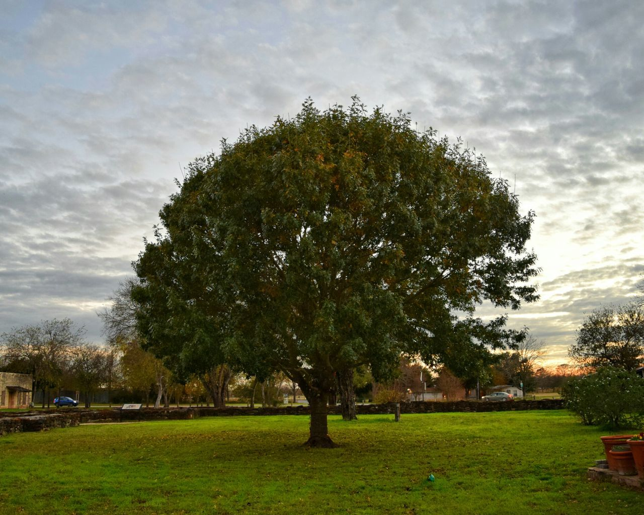 tree, grass, growth, sky, nature, outdoors, no people, day, beauty in nature