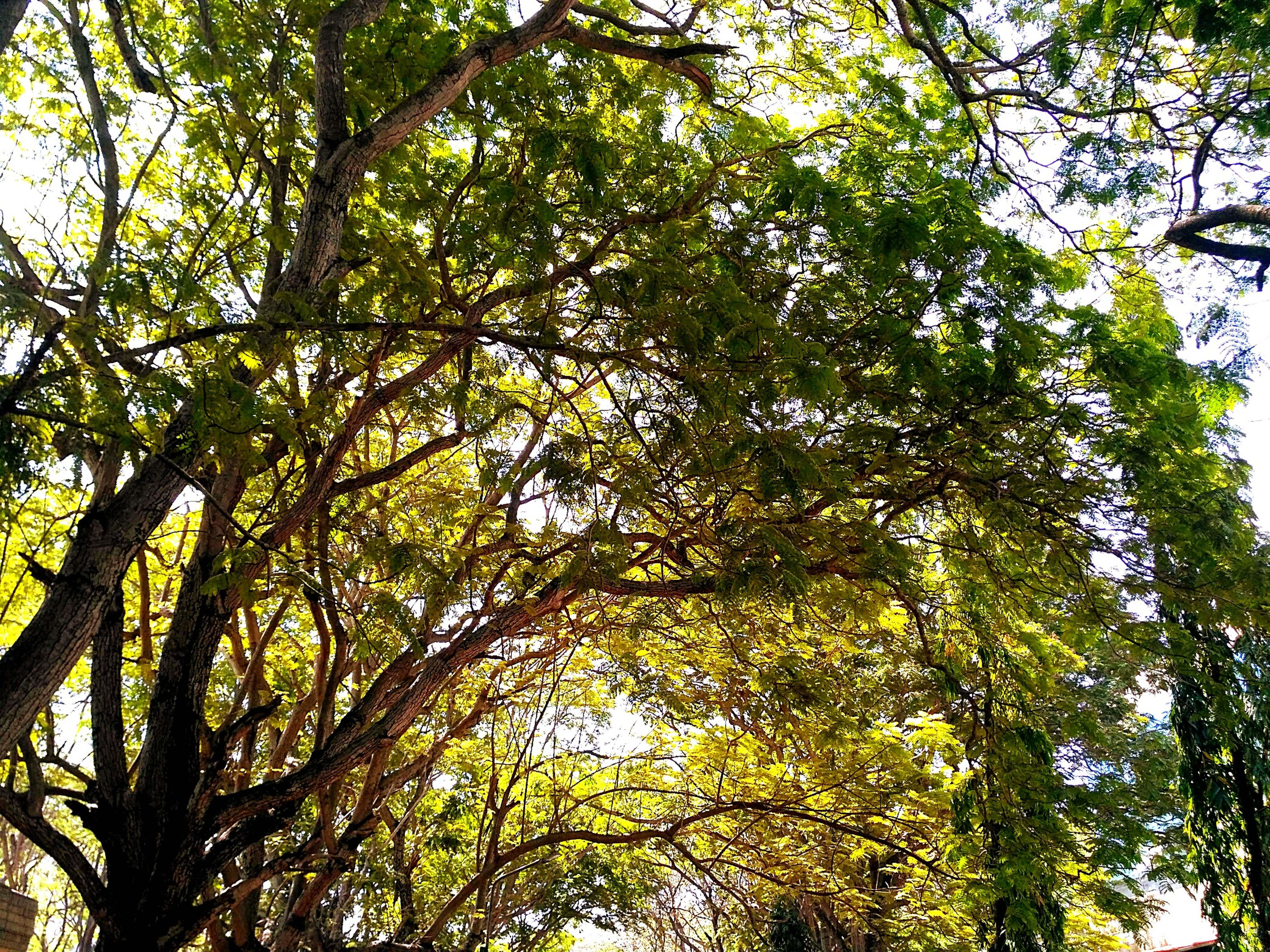 tree, low angle view, growth, nature, branch, beauty in nature, forest, day, no people, green color, outdoors, tree canopy, tranquility, tree trunk, leaf, scenics, freshness, sky