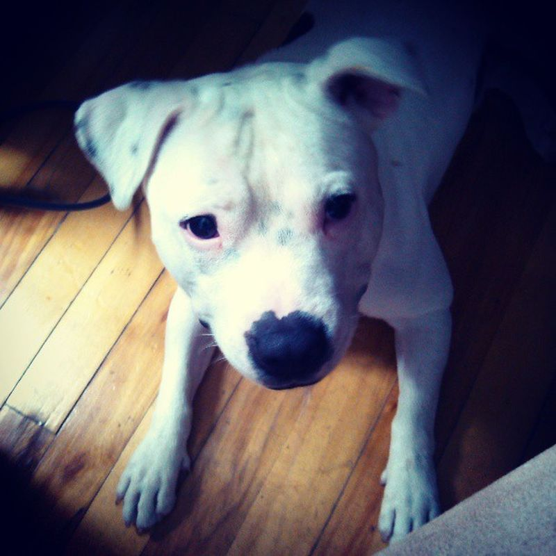 Chico Cuute  Mybros Dog @mel_pinsky