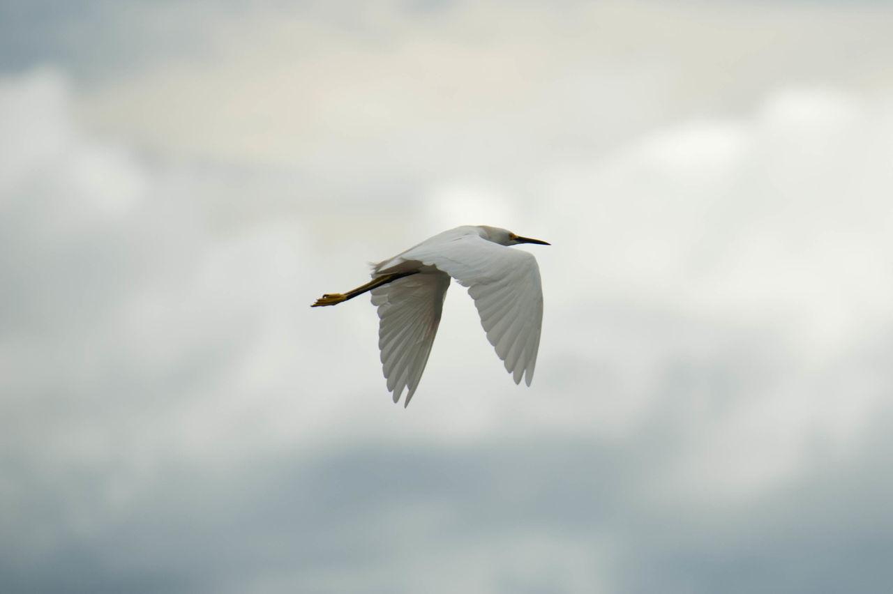 Beautiful stock photos of birds, , Animal, Bird, Environment