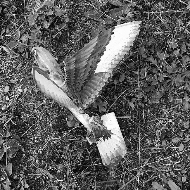 Bird EyeEmAnimalLover EyeEm Nature Lover After The Rain Outside Forgotten Flying Bird Childs Toy Maine Found On The Roll Hello World My Perspective No People Eyeemphotography Left Behind Blackandwhite Abstract Monochrome Photography