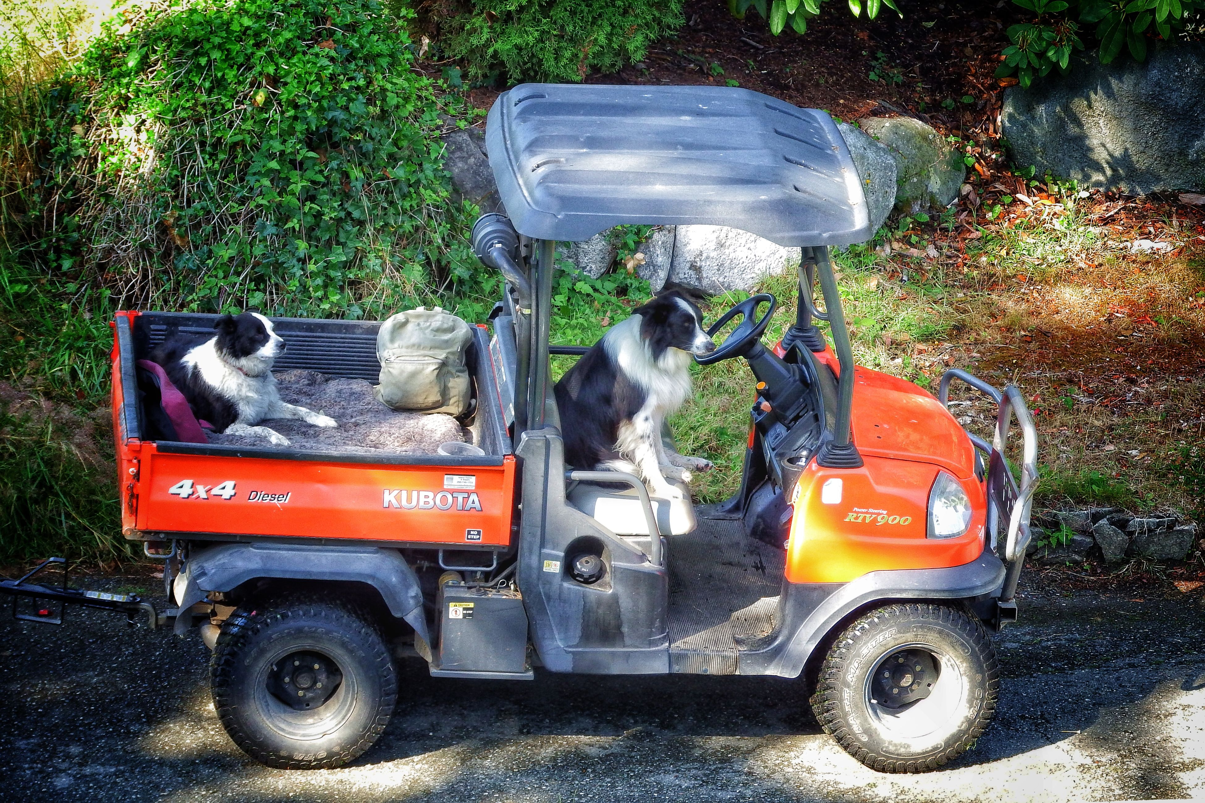 """""""Hard day at the office"""" Working Dogssheep Dogs,awaiting Master,looped! No People Outdoors Parked Parking Resting Up Maw Siting Master, Busy Day Sheep Dogs,golf Course Work Stationary Transportation"""
