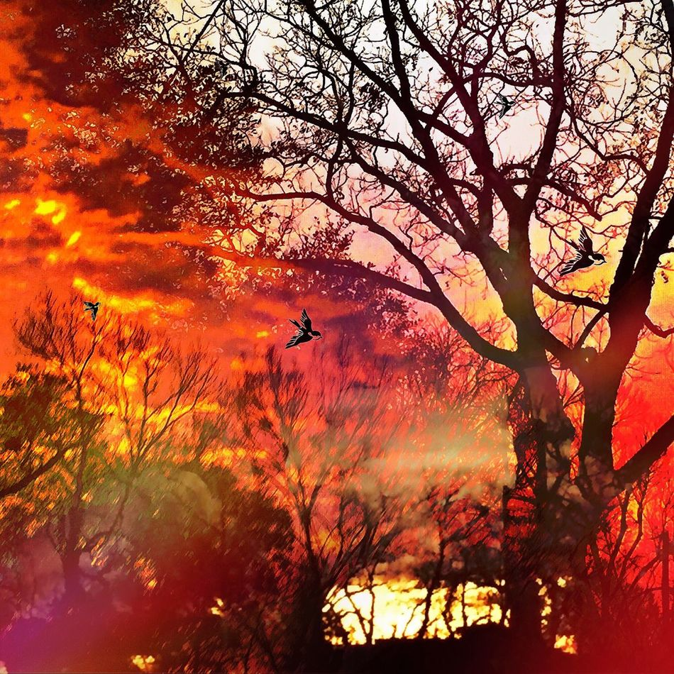 Burning Inferno! Often times the biggest battle is the ones we fight within ourselves.🔥 Sunrise_sunsets_aroundworld EyeEm Best Shots - Sunsets + Sunrise Sky And Trees Light Up Your Life Creative Light And Shadow Sunset #sun #clouds #skylovers #sky #nature #beautifulinnature #naturalbeauty #photography #landscape EyeEm Best Shots - Landscape The EyeEm Facebook Cover Challenge Tadaa Friends Streamzoo Family For My Friends That Connect Sun_collection, Sky_collection, Cloudporn, Skyporn EyeEm Best Edits EyeEm Best Shots EyeEm Masterclass Sky_collection Enjoying The Sun Eye4photography  Art Inspired By Life Tree Hugger TreePorn Huggingatree  Skylovers Sky And Clouds Lookingup