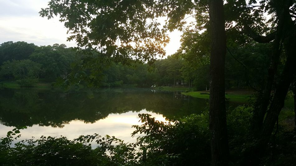 My Pond at Dusk Lake Nature Reflection Lake Landscape Outdoors Pond Small Lake Peaceful Evening Peaceful Place Peaceful And Quiet Peaceful Sunset Quiet Places Quietness Green Nature Green Leaves Green And Blue Arkansas, USA Arkansas Sunset Home Is Where The Heart Is Homesweethome