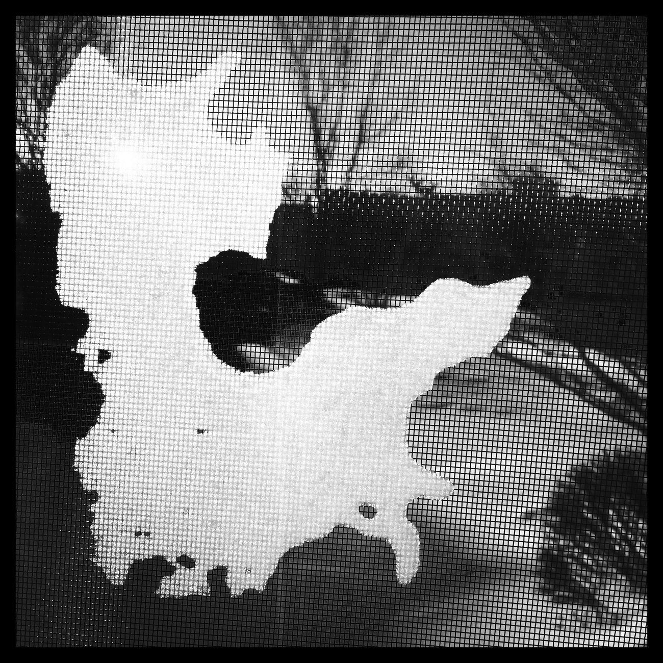 A Snow Continent in my Window Blackandwhite