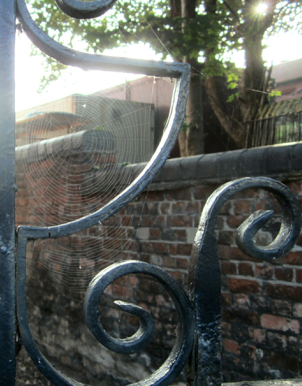 spotted this web, glistening in the morning sun! The Purist (no Edit, No Filter) Old Brickwork Old Gates Spidersweb Perfect Match Learn & Shoot: Layering Learn & Shoot: Leading Lines