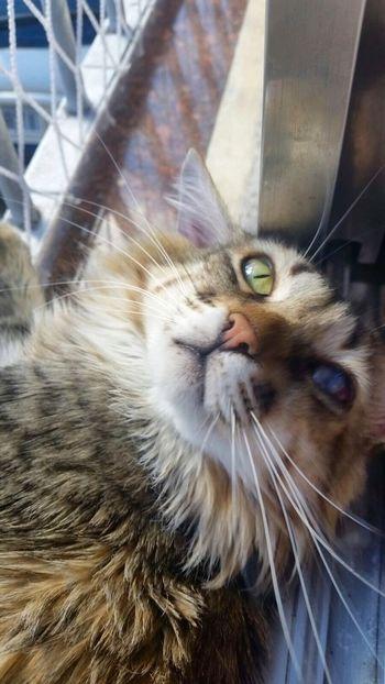 Brazil Hi! Cat I Love My Cats  Cat♡ Lovecats❤️ I Love My Cat Cats Hello World Brasil ♥