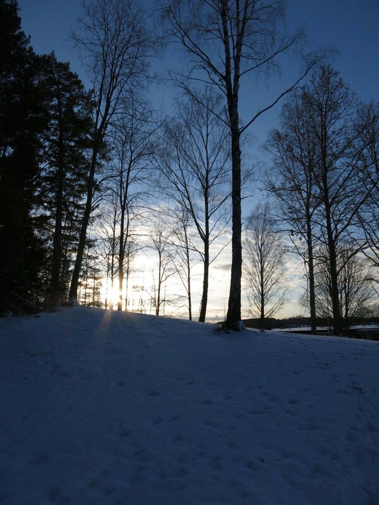 Walking home this beautiful evening. Sunset Evening Sky Landscape Winter Spring Snow Forest