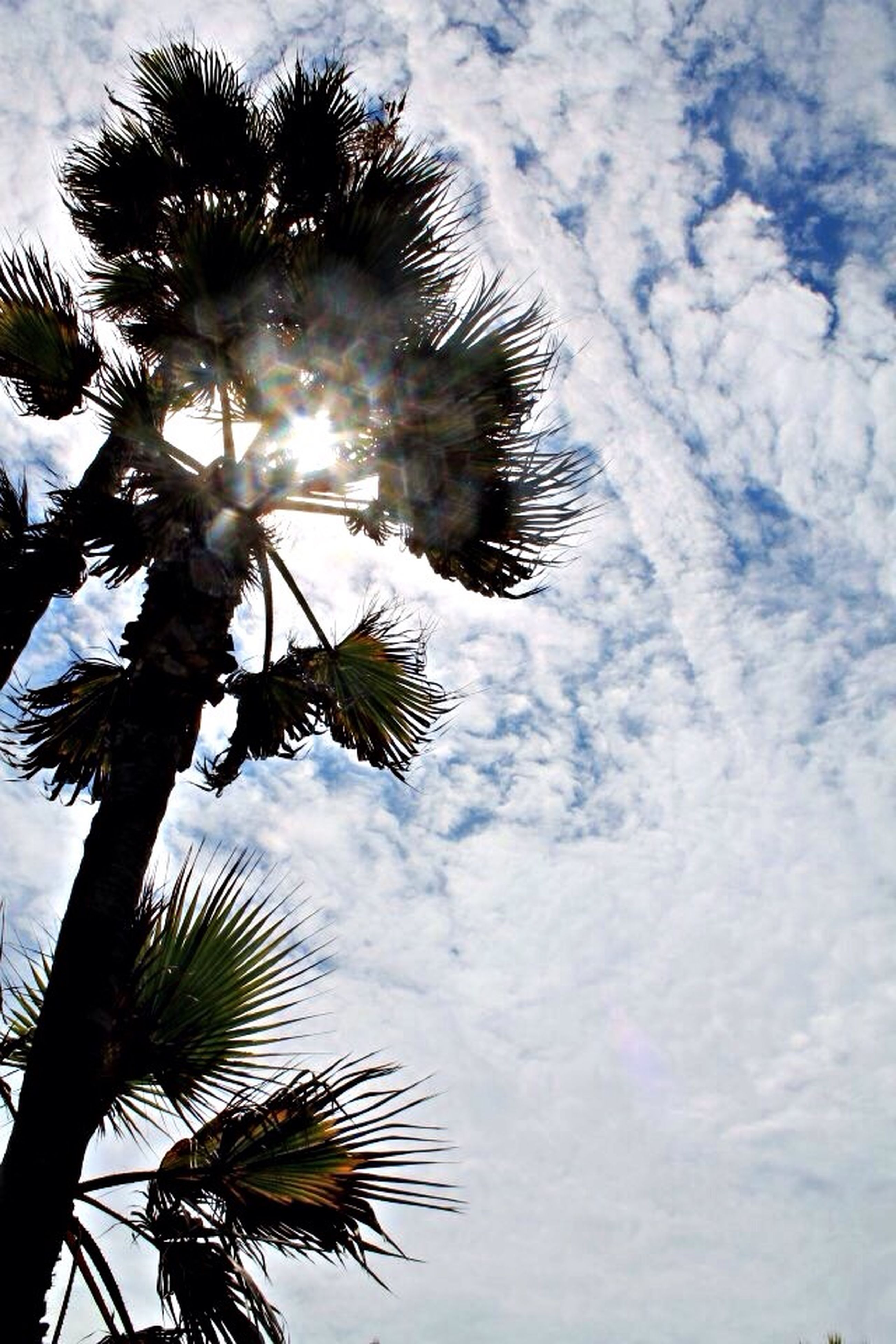 palm tree, low angle view, sky, sun, tree, growth, nature, beauty in nature, sunbeam, tranquility, sunlight, cloud - sky, silhouette, coconut palm tree, tree trunk, palm leaf, lens flare, tall - high, scenics, outdoors