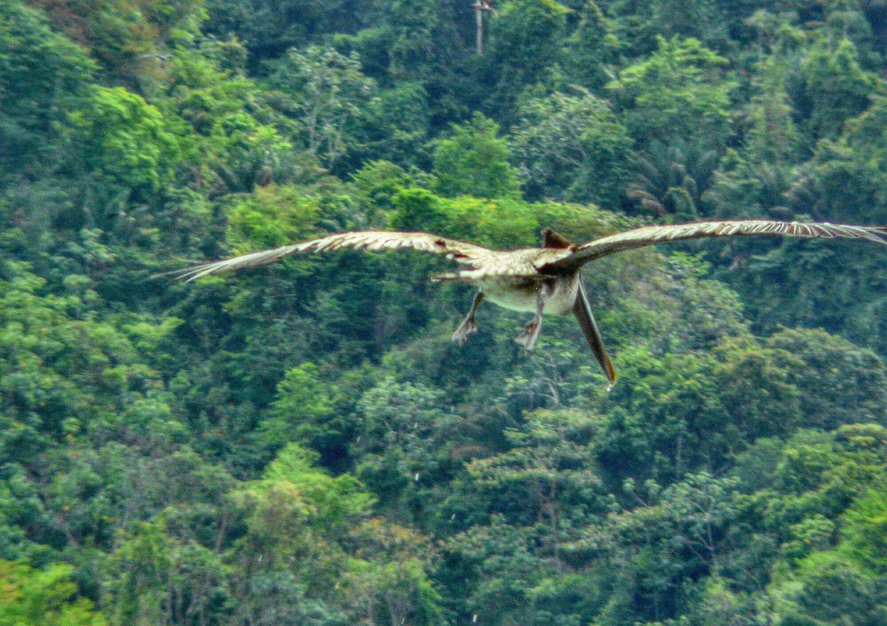 tree, flying, one animal, nature, animals in the wild, green color, spread wings, forest, day, no people, animal themes, mid-air, outdoors, plant, bird, beauty in nature