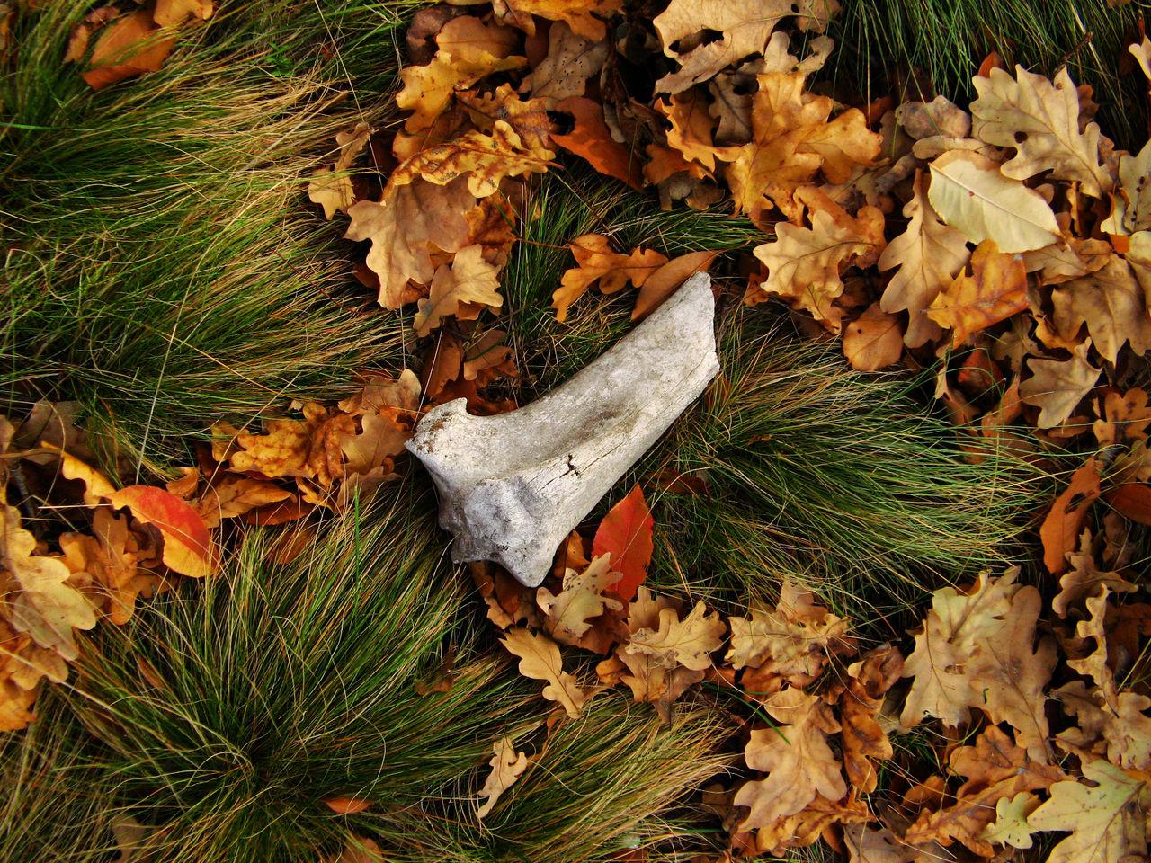 Bone  Grass Autumn Leaves Fine Art Photography