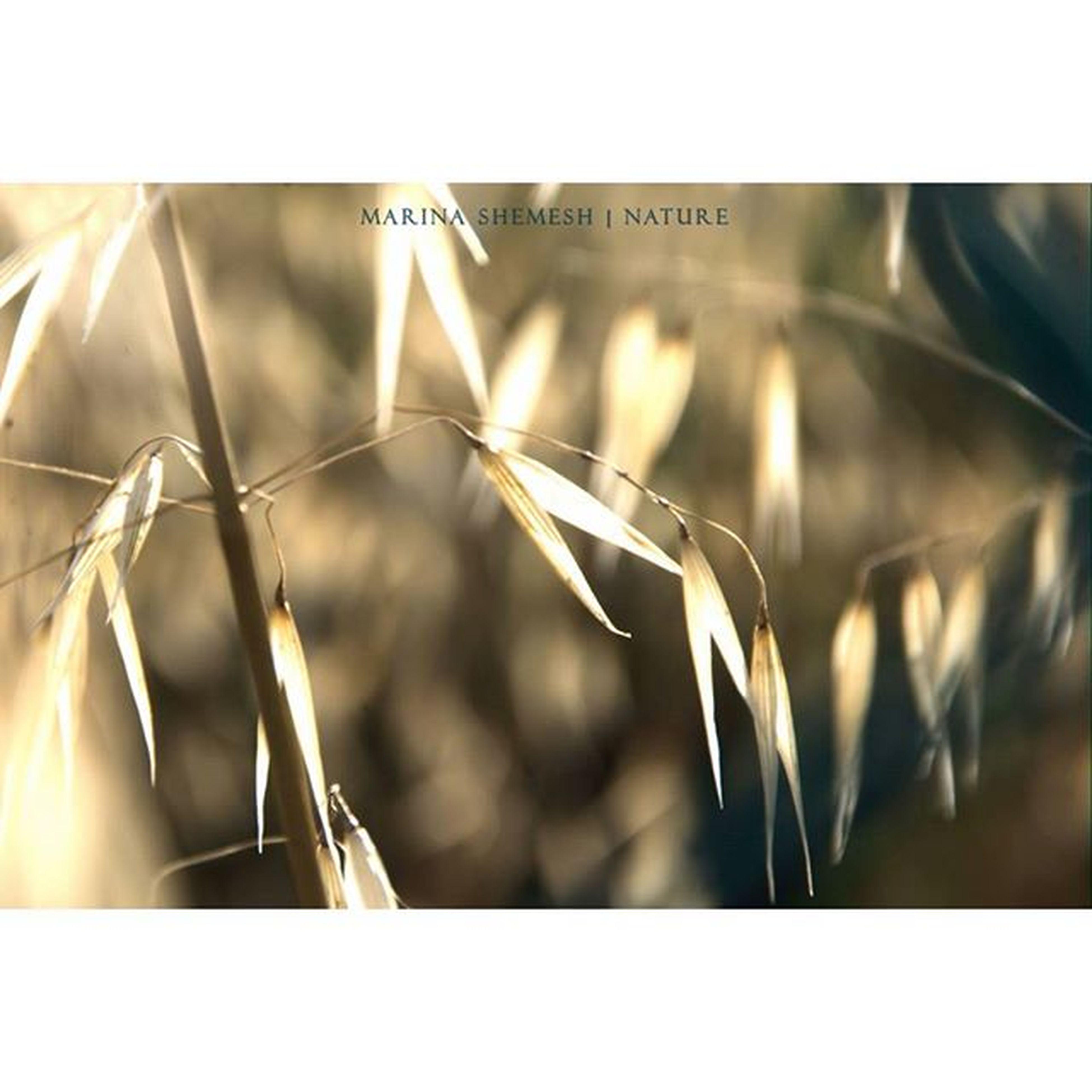 """Abstract in light"" Nature Naturelover Sunlight Goldenhour Catchinglight Photooftheday Instagram Igers"