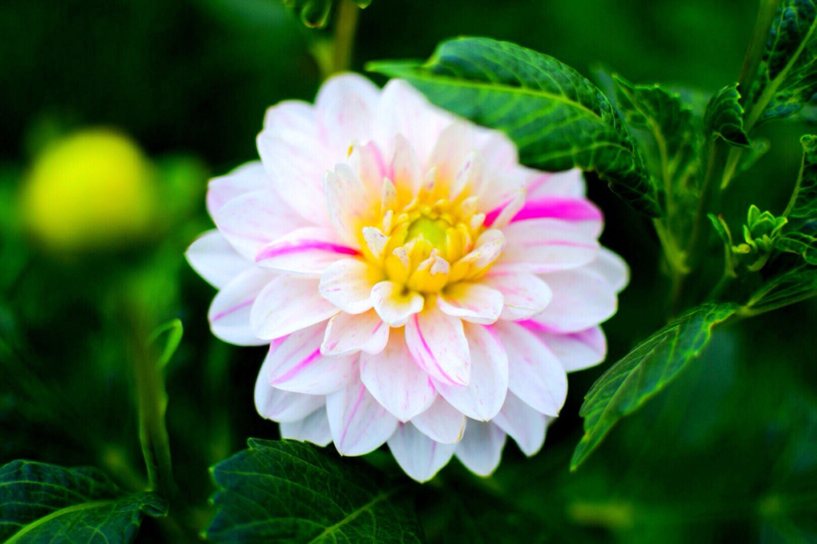 flower, petal, freshness, fragility, flower head, growth, beauty in nature, close-up, pink color, focus on foreground, blooming, single flower, nature, plant, leaf, in bloom, pollen, day, park - man made space, outdoors
