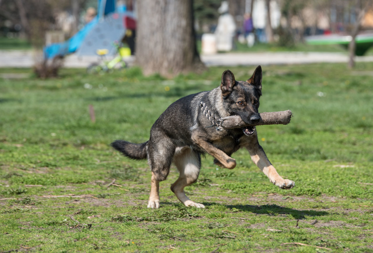 Beautiful stock photos of lustige tiere, Animal Themes, Carrying In Mouth, Day, Dog
