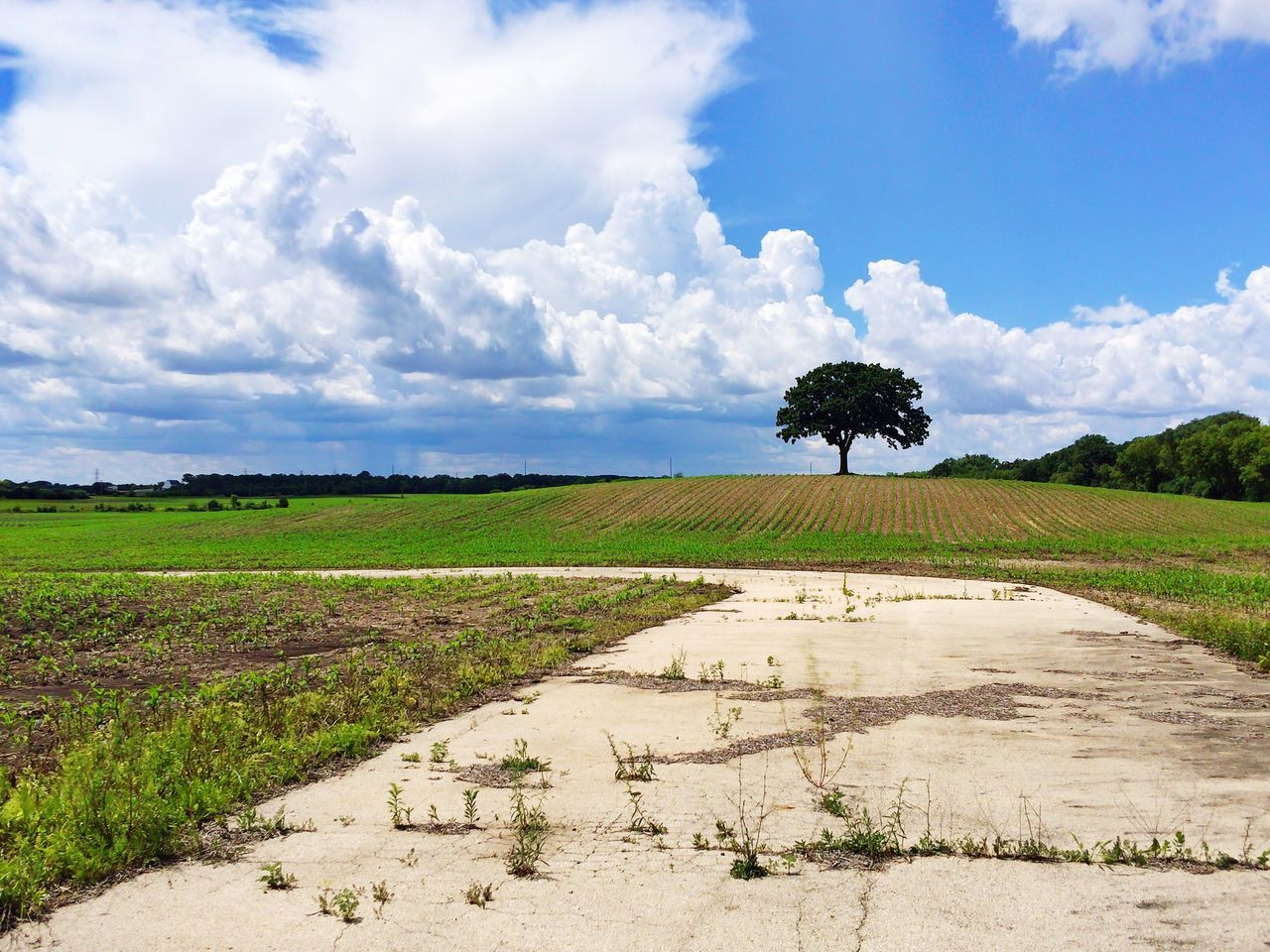 agriculture, field, tranquility, nature, growth, tranquil scene, beauty in nature, rural scene, landscape, scenics, cloud - sky, sky, cultivated land, day, outdoors, no people, tree