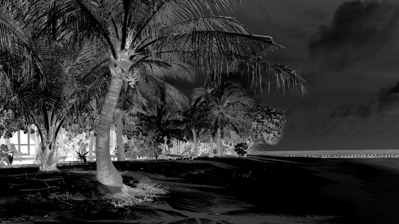 tree, water, nature, palm tree, outdoors, beauty in nature, growth, no people, scenics, night, sky