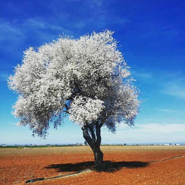 Tree Cerezos Campina Blue Red White Leaves Hot Day Cycling Relaxing