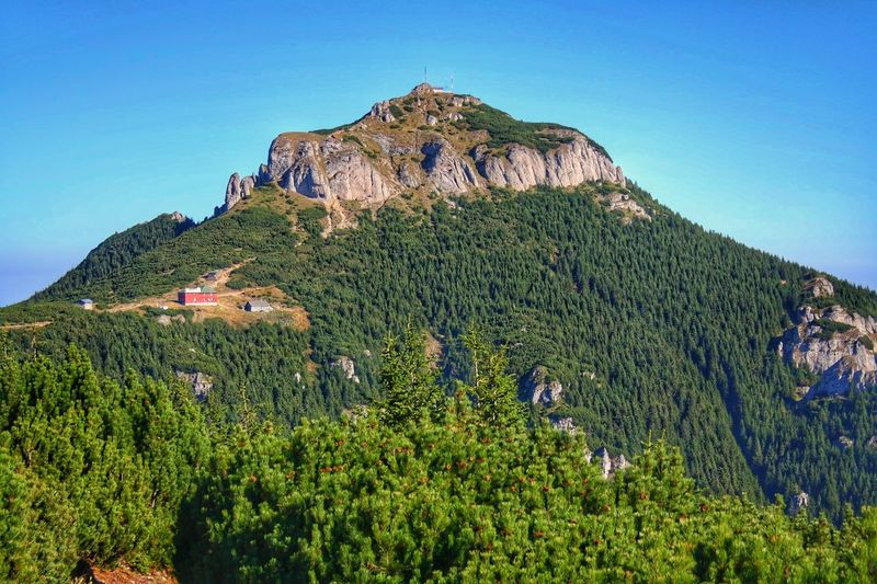 Clear Sky Tranquil Scene Green Color Beauty In Nature Growth Mountain Landscape Low Angle View Nature Non-urban Scene Idyllic Majestic Vacations Naturelovers Travel Photography Fresh Air... Tree Beauty In Nature Panoramic Photography Tourism Top Of The World