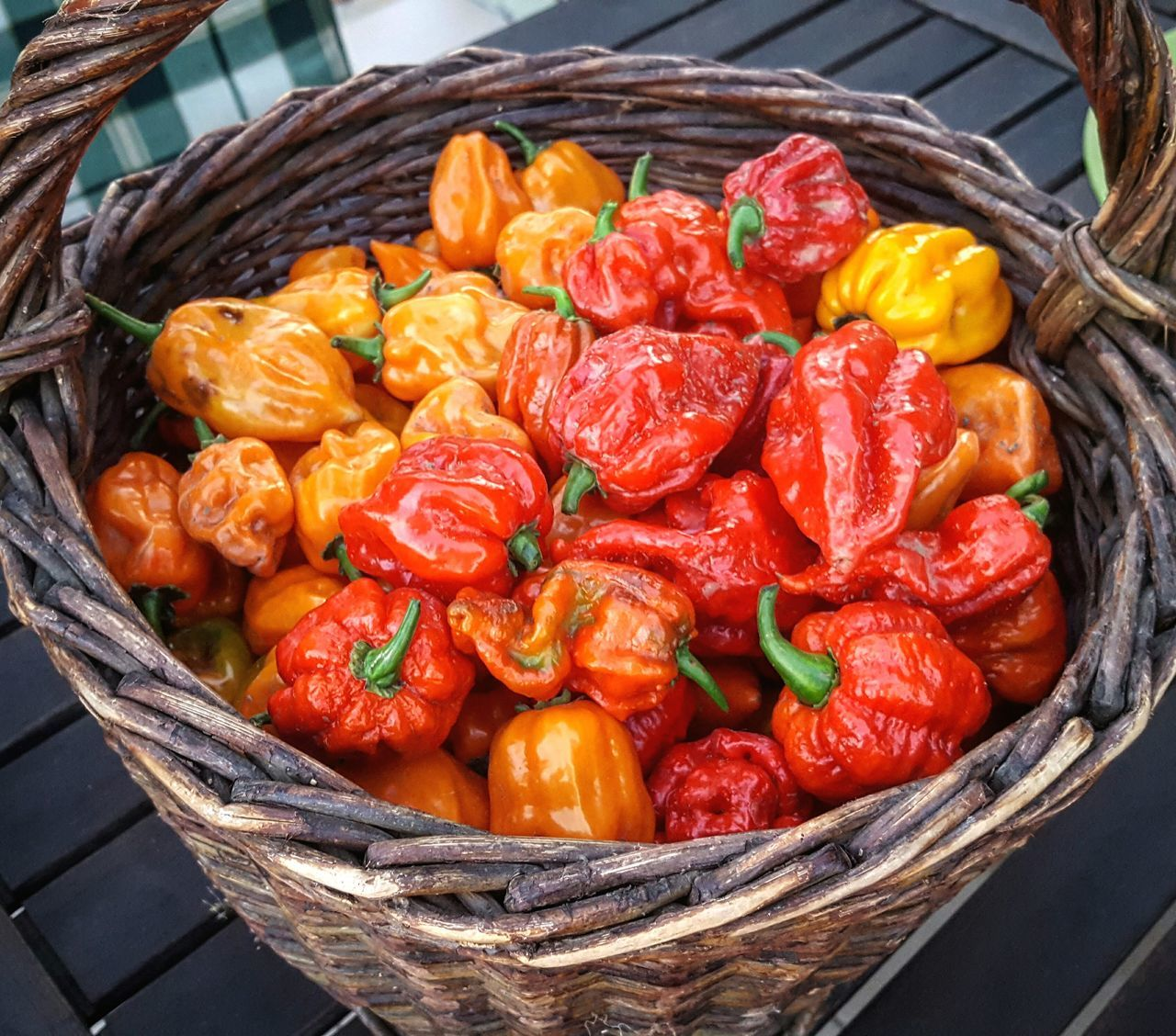 It is gathering season! Food Food And Drink Red Freshness Vegetable Healthy Eating Market Yellow No People Close-up Asian Food Plant Chilli Chillipepper Pepper Peppers Trinidad Scorpion Trinidad Scorpion Moruga Fruit Freshness Ready-to-eat Red Habanero Habaneropepper Habanero Pepper