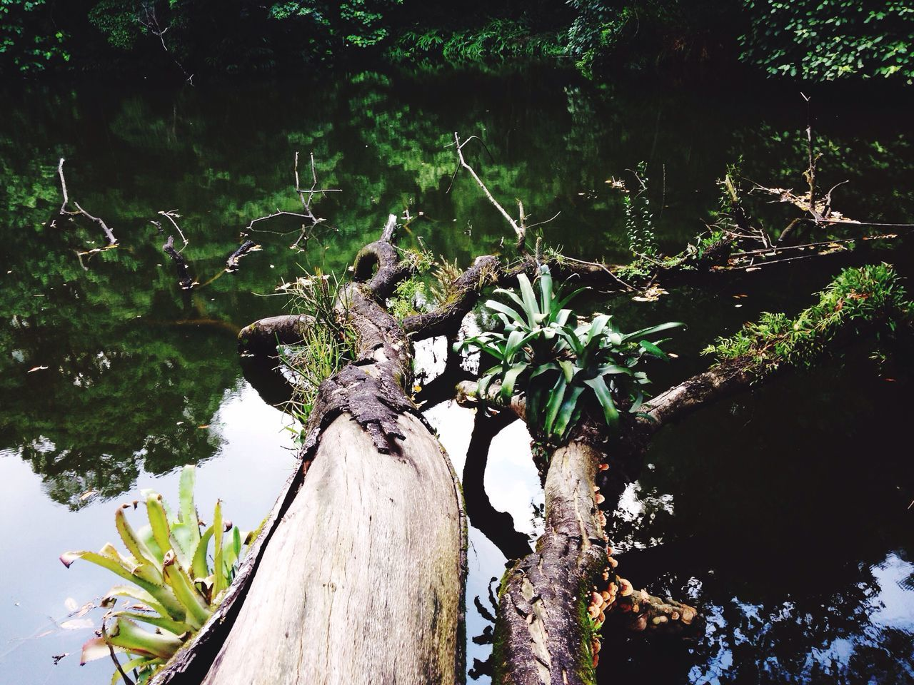 Dead x Live Nature