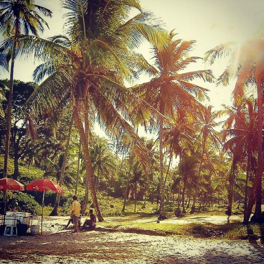 Traumstrand Strand Praia Itacare itacare brasil Brasilien brazil beiramar coco palmen palms sol sunshine sommer sonne urlaub ferias holiday gegenlicht instagood nofilter nature picoftheday