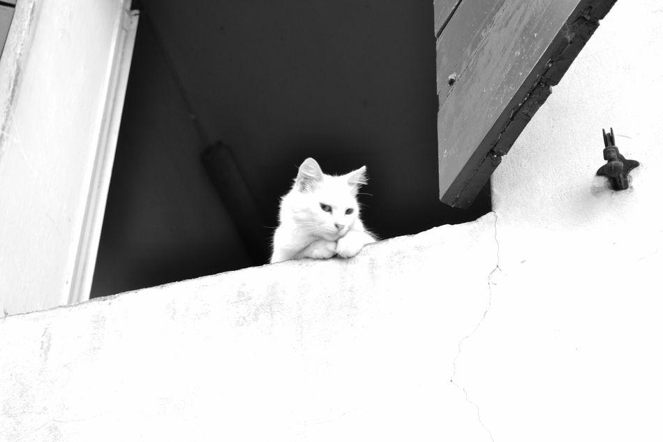 My little princess Taking Photos Blackandwhite Sfuocata Bella Estate Catlife Cat Catlover Beautiful Day Shot