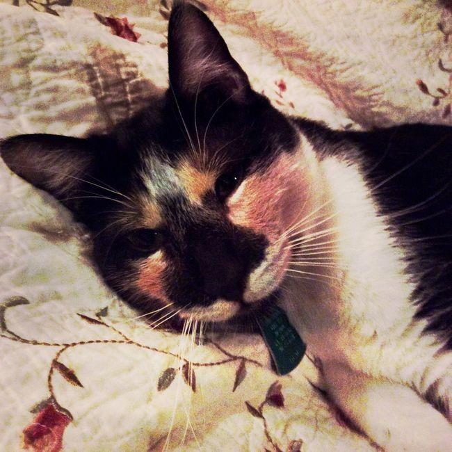 My Kabuki Kitty #SanAntonio #Texas xxoo