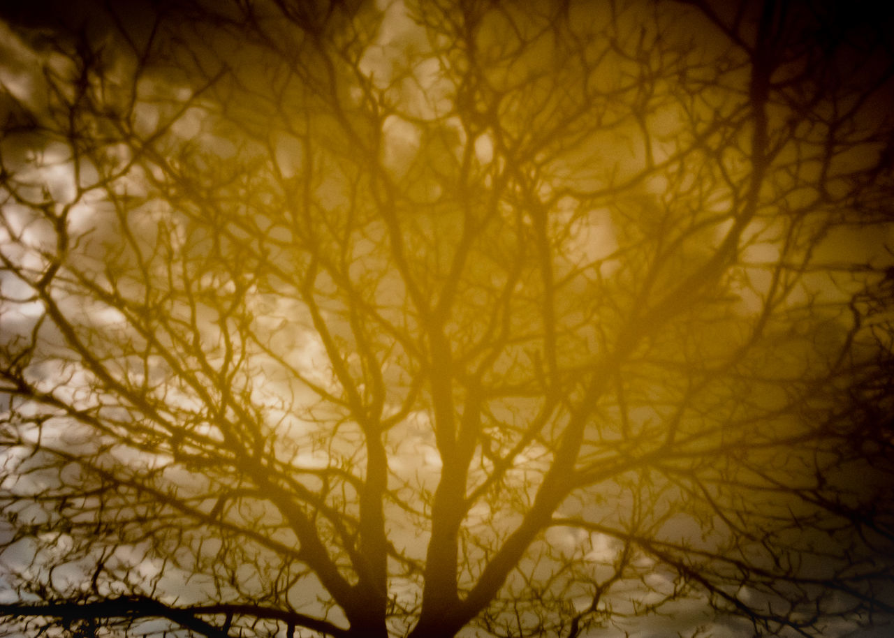 Abstract Nature Available Abstraction Beauty In Nature Bronze Flora Morbidity Mystery No People Outdoors Tree Tree Of Life Veins Yellow