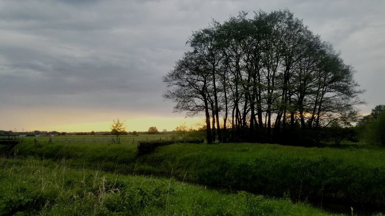 Morning Light Beauty In Nature Sunrise Cloud - Sky Landscape No People Nature Germany🇩🇪 Sky Trees