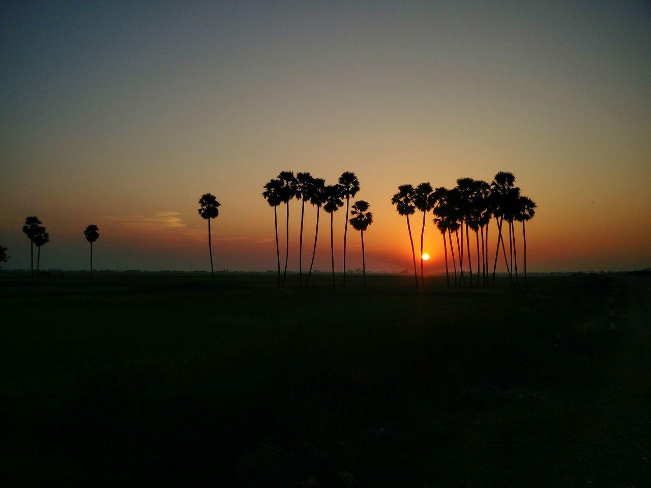 Sunset Dusk Silhouette Travel Outdoors Palm Tree Landscape Sky Tree Travel Destinations Cloud - Sky No People Nature EyeEm Best Shots EyeEmBestPics EyeEm Gallery Eyeemphotography Beauty In Nature Colors Oneplus2 Oneplusphotograpgy India Indiapictures