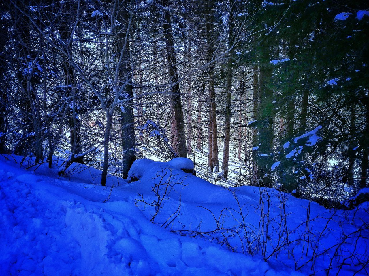 Gloomy forest Blue Snow Winter Tree No People Nature Cold Temperature Outdoors Beauty In Nature Sky Close-up Day Snowfall Forest Forest Photography Forestwalk Forest Path Forest Park Forest View Snowy Forest Snow ❄ Snowscape Snowy Trees Snowy Mountains Backgrounds Miles Away